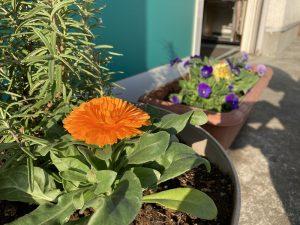 花壇オレンジ